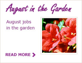 August Tips for your Garden
