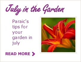 July Tips for your Garden