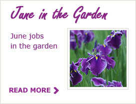 June Tips for your Garden