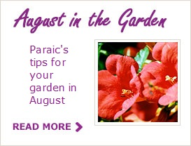 Paraic Horkan's Tips For Your Garden in August