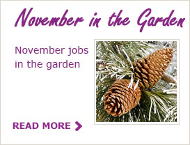 Paraic's Tips For Your Garden In November