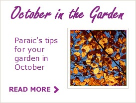 Paraic's Tips For Your Garden In October