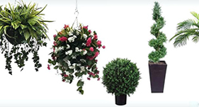 Artificial Plants & Trees