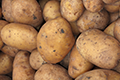 How to Control & Prevent Potato Blight