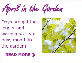 Paraic's Tips For Your Garden In April