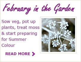 Paraic Horkan Tips For Your Garden In February