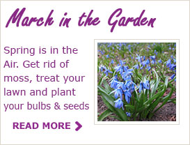 Paraic Horkan's Tips For Your Garden for this March