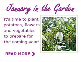 Paraic Horkan Tips For Your Garden In January