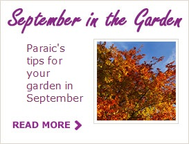 Paraic's Tips For Your Garden In September