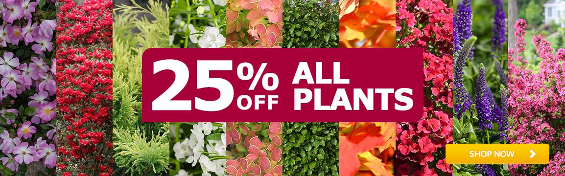 Plants - 25% off all plants