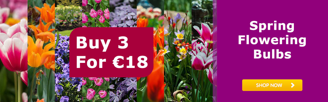 Spring flowering bulbs Buy 3 for €18
